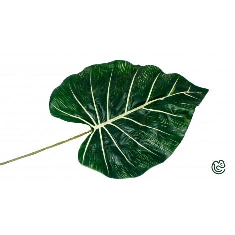 List Potos Zeleno-Biely 42cm
