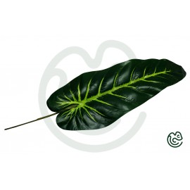 List Antúrium Zelený 55cm