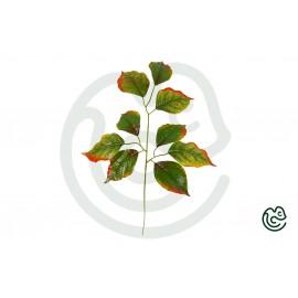 Umelá Rastlina Lipa Červeno-Zelená 55cm