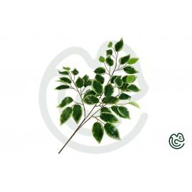 Umelá Rastlina Fikus Bielo-Zelená 60cm