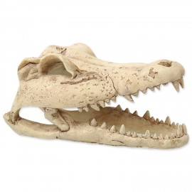 REPTI PLANET Krokodília lebka 13,8 cm