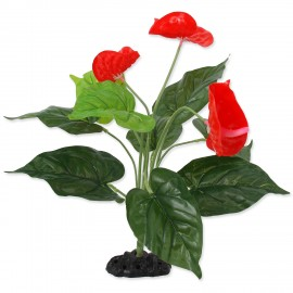 REPTI PLANET Rastlina - Kvitnúca Anthurium 40 cm